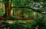 Ogham trees