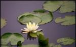 Mindfulness, Maitri Studio, Veronica Ellis
