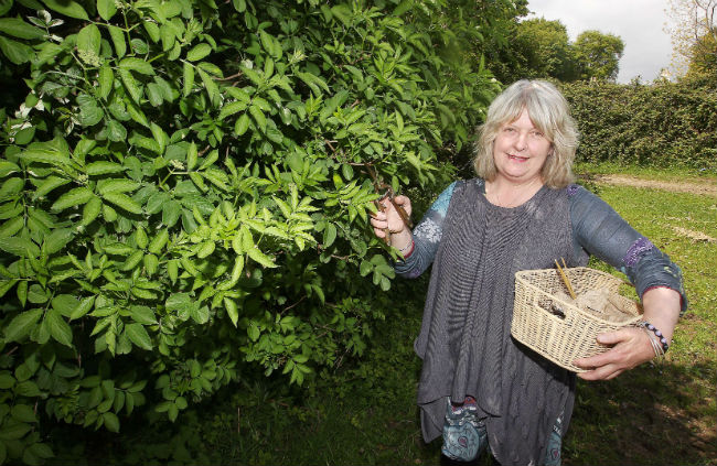 Joan Howard, Herbs of Boirche, Master Herbalist,, northern Ireland